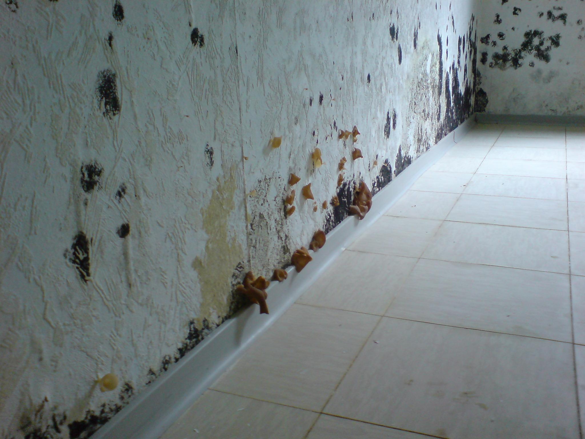 Pilze an Wand 1