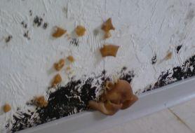 Pilze an Wand Teaser