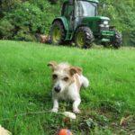 Tinni nutzt die Gartenarbeit für eine Ballspiel-Runde